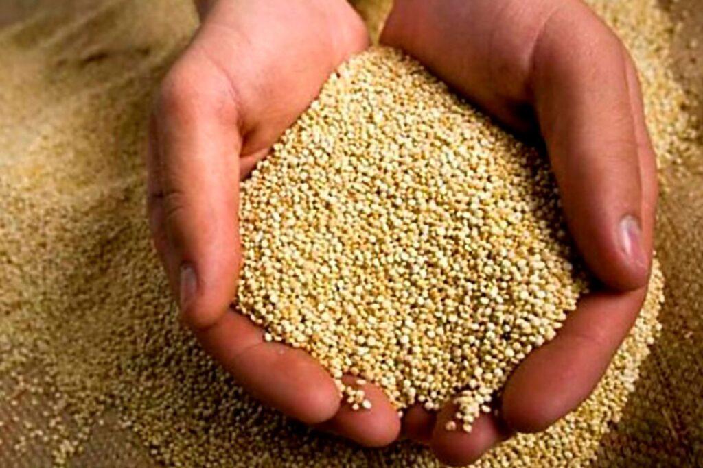 Organic quinoa farmers