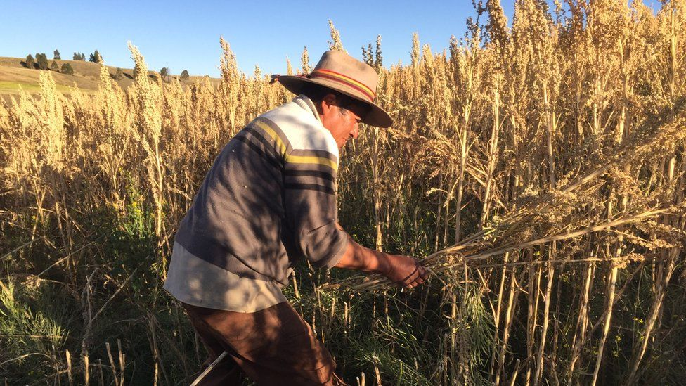 Agricultor de quinua