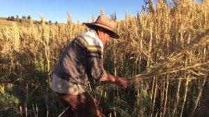 "BBC 新闻报导 ""超级食品改变了秘鲁农民的生活"""