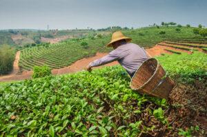 beneficios agricultura organica