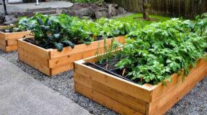 organic garden at home
