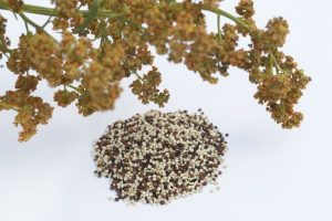 uses and functionalities of quinoa