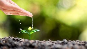 Organic fertilizers in the soil